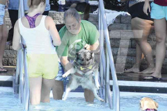 090821dogs2